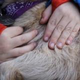 aaien, knuffelen en wandelen met geitjes bij buitengoed de gaard limburg