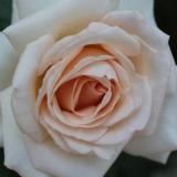 aspects of love roos geplat door lone van roosendaal, rené van kooten en maaike widdershoven bij buitengoed de gaard