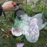 barry atsma snoeit de vlinderstruik geplant voor antonie door vlinder, merlijn en isa hoes bij buitengoed de gaard 06-04-2015