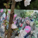 bloesem huub stapel boom mei 2012