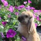 flappie helpt met de zomerbloeiers
