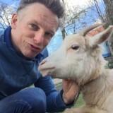 geit jetje, de absolute knuffelgeit, mag een selfie met barry atsma bij buitengoed de gaard