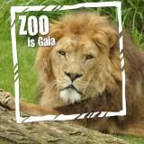 kopie-van-gaiazoo-leeuw-zoo-is-gaia