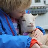 kusje tijdens de vakantie voor geit jetje buitengoed de gaard