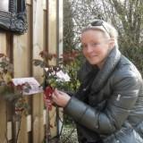 lone van roosendaal snoeit de aspects of love rozen tijdens haar verblijf bij buitengoed de gaard maart 2014 orchard of fame