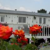 nieuwe roos voor lone van roosendaal bij de mammaloewagen buitengoed de gaard orchard of fame