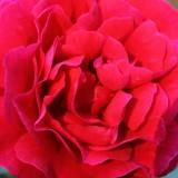 rode rett roos buitengoed de gaard