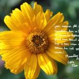 tekst door tibor lukács bij zijn mazzeltov zonnebloem