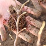 suzan seegers plant magnolia bij buitengoed de gaard foto belinda keulen