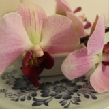 orchideeen, seizoen, honeymoon, in badkamer pipowagen deluxe buitengoed de gaard