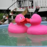 tub ducks in de dutchtub bij pipowagen deluxe buitengoed de gaard