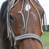 de buren van de weide wereld wellness grazende paarden in aangrenzend weiland