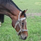weiland naast de weide wereld waar de paarden lopen te grazen relaxen in het weiland