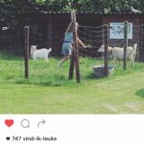compliment van georgina verbaan voor verblijf bij buitengoed de gaard, mammaloewagen, pipowagensuperdeluxe leudal knuffelen en wandelen met geiten